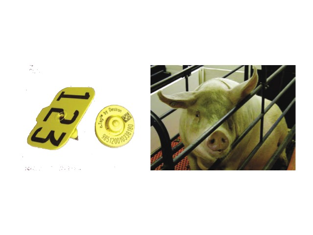 etag for sows and animals